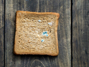 Read more about the article Reflection On Sunlight Affecting Moulds On Breads?(Matthew GAO )