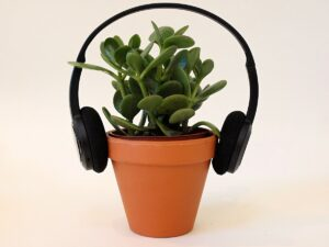 Read more about the article Do different genres of music effect the rate of plant growth Ethan and Linus – Y7 Ethan and Linus